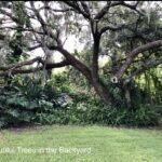 Beautiful Backyard Trees